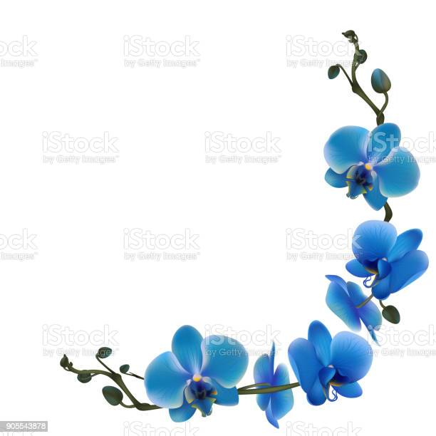Blue orchids tropical flowers exotic plants frame border vector vector id905543878?b=1&k=6&m=905543878&s=612x612&h=aqm698rasfvgf9y kiljzxjtun7froy stjdm8eg2wo=