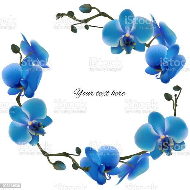 Blue orchids tropical flowers exotic plants frame border vector vector id905543908?b=1&k=6&m=905543908&s=612x612&h=uobhuqyior4otpj1jmtvtprm0k8qct7cq0ezhdjhxxu=