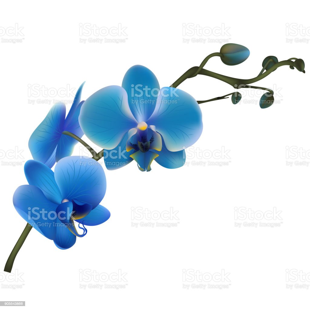 Blue Orchids Tropical Flowers Exotic Plants Vector Illustration