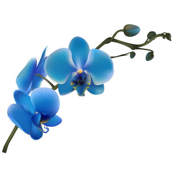 ilustrações de stock, clip art, desenhos animados e ícones de blue orchids. tropical flowers. exotic plants.  vector illustration. - flower white background