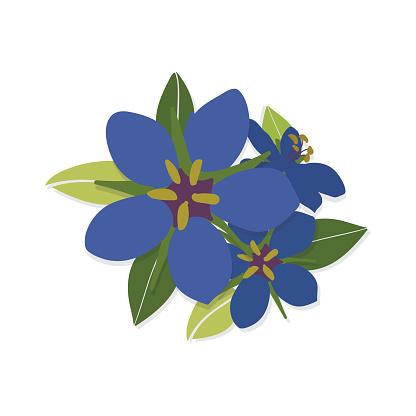 blue pimpernel flower flat vector illustration bouquet.