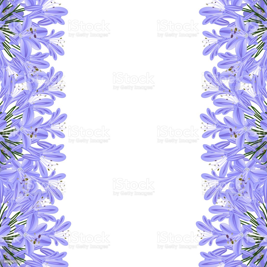 Blue Purple Agapanthus Border - Lily of the Nile, African Lily vector art illustration
