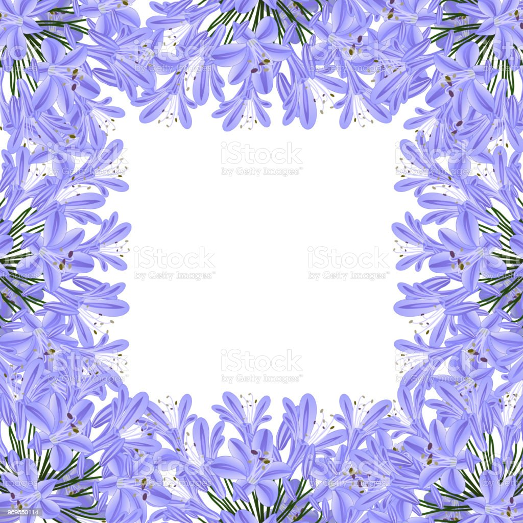 Blue Purple Agapanthus Border - Lily of the Nile, African Lily2 vector art illustration