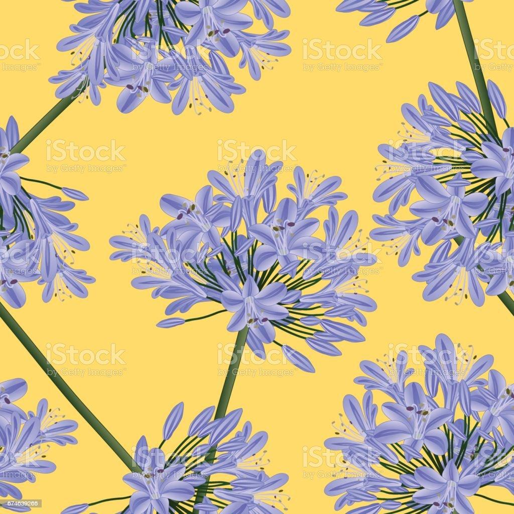 Blue Purple Agapanthus on Yellow Background. Vector Illustration vector art illustration