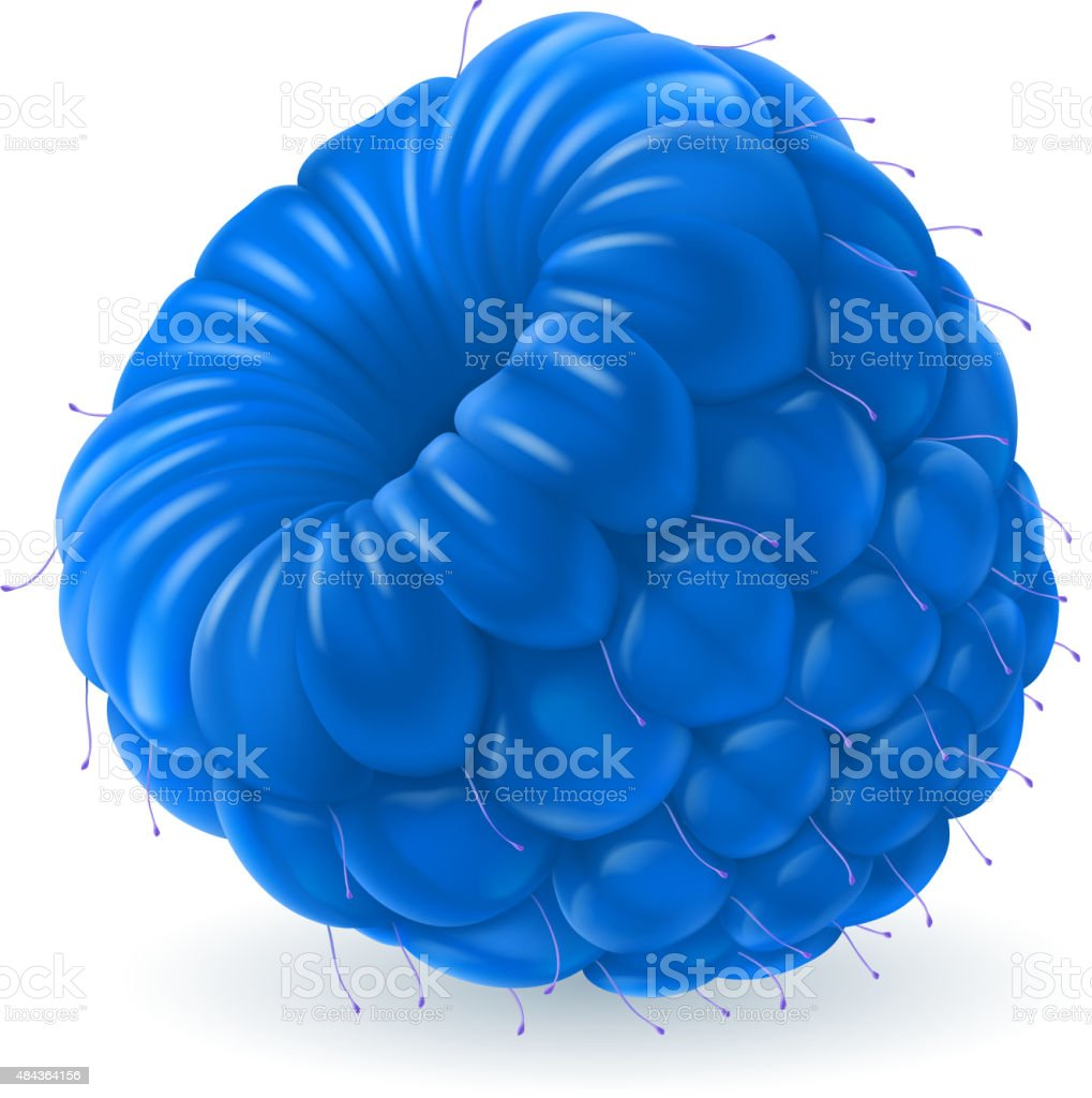 Blue raspberry over white vector art illustration