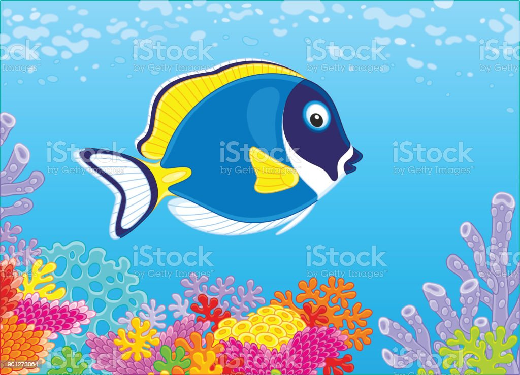 Blue surgeon fish on a coral reef vector art illustration
