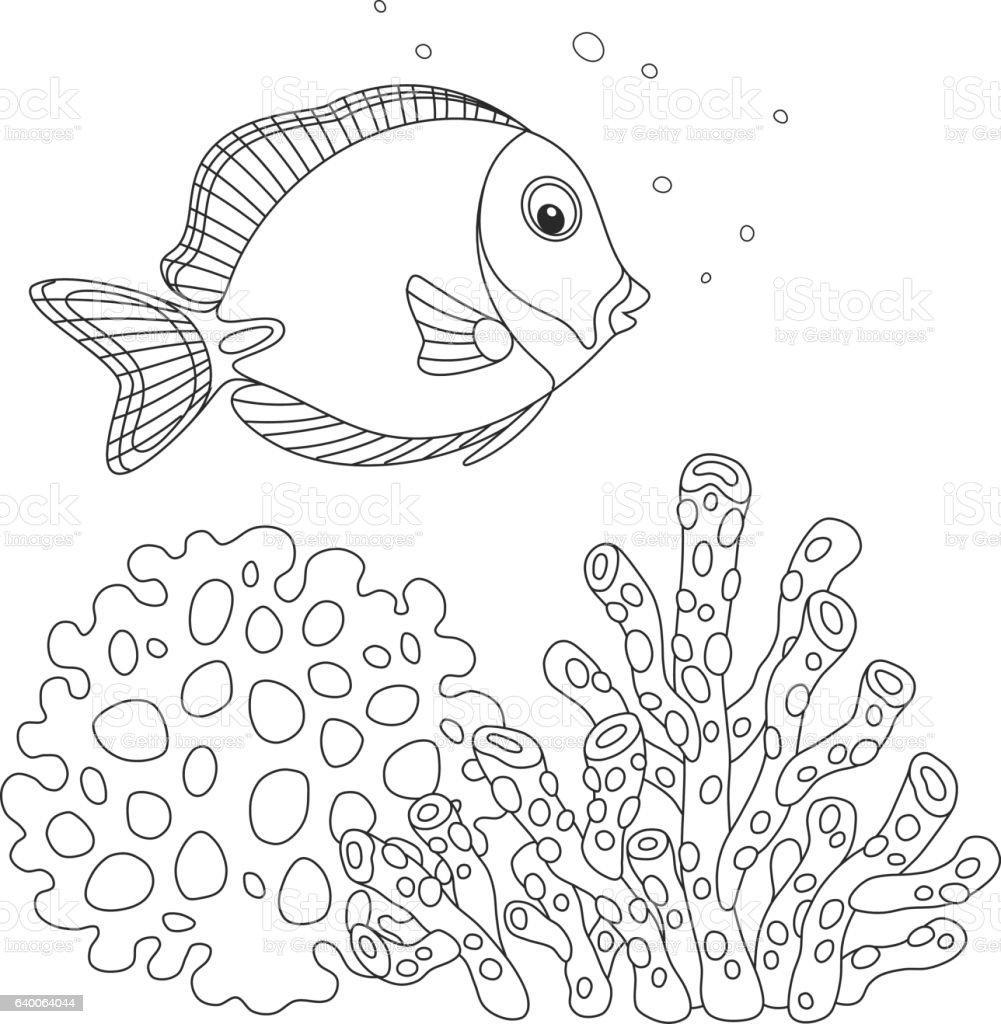 Blue surgeon fish vector art illustration