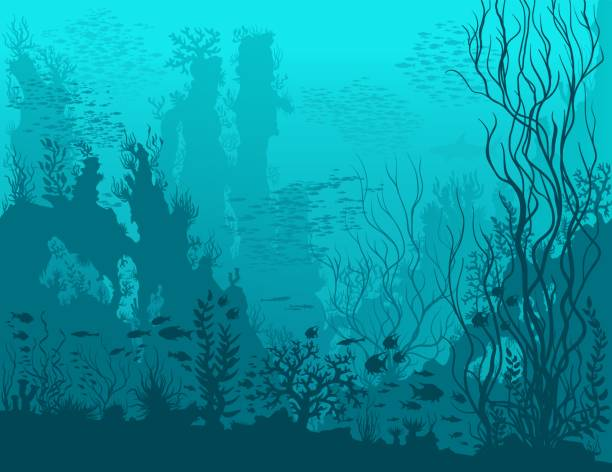 Blue underwater landscape Underwater landscape with shark, fishes, coral reefs, huge rocks and see weeds. Blue tropical undersea world. Vector detail hand drawn illustration of sea-life. underwater stock illustrations