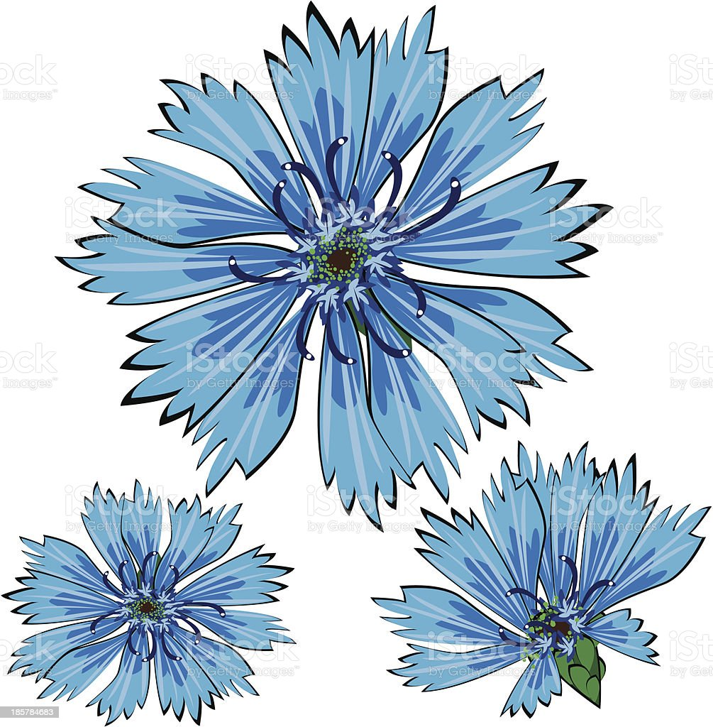 Blue Vector Cornflower Flowers Isolated On White Background Stock