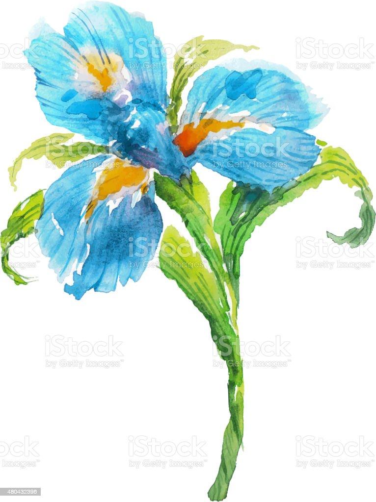 Blue Watercolor Iris Flower Stock Vector Art More Images Of 2015