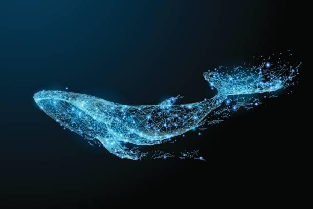 illustrazioni stock, clip art, cartoni animati e icone di tendenza di blue whale low poly blue - nuoto mare