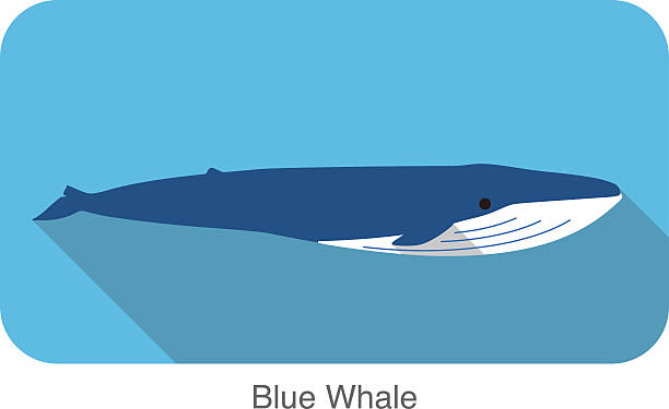 Blue whale swimming in the sea flat icon design vector art illustration