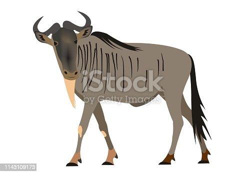 istock Blue wildebeest, Connochaetes taurinus 1143109173