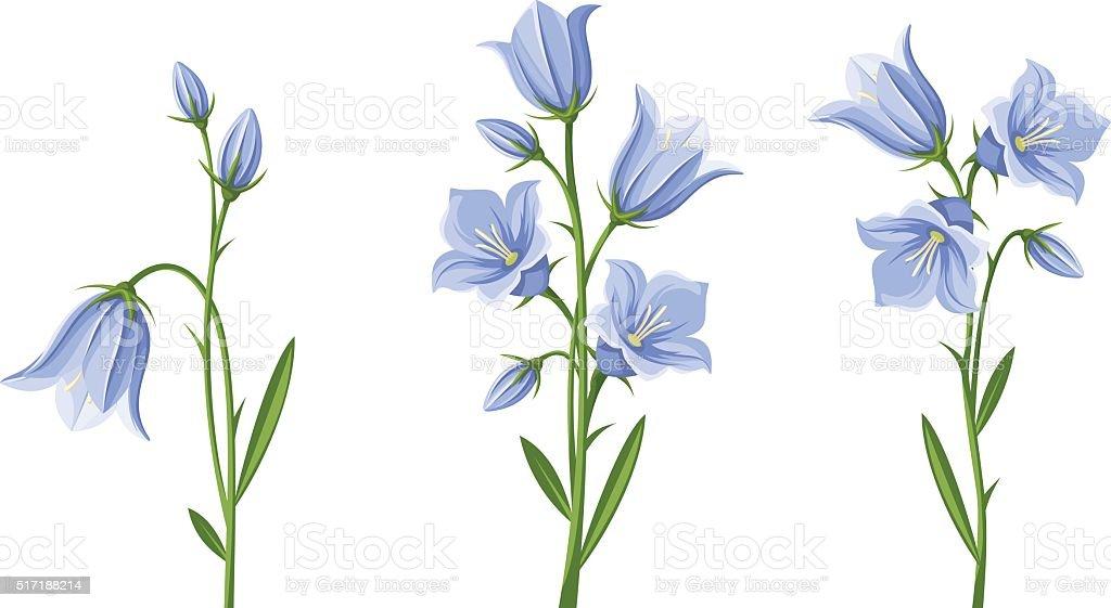ブルーベルの花。ベクトルイラストレーションます。 ベクターアートイラスト