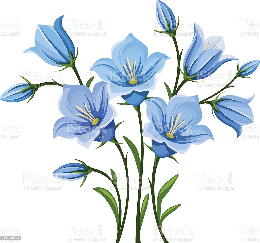 Bluebell flowers. Vector illustration. vector art illustration