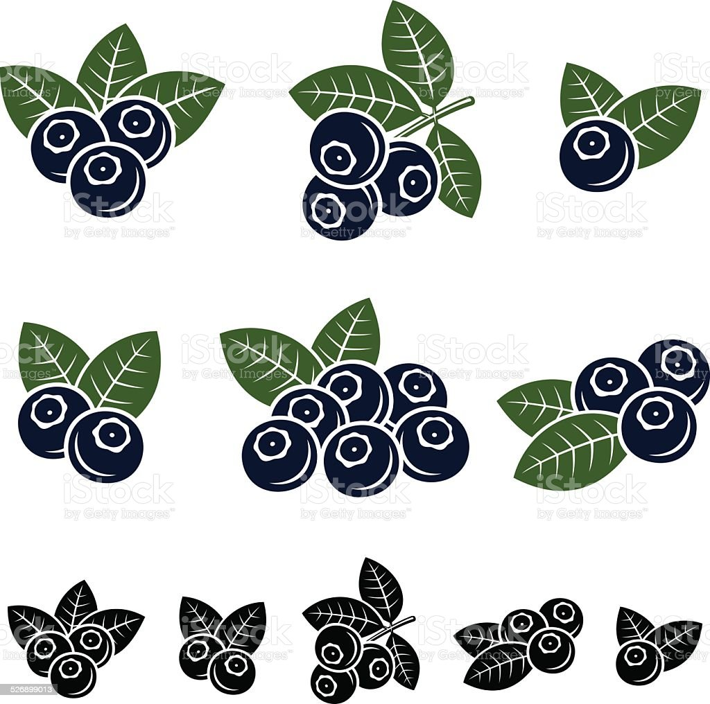 Blueberries set. Vector vector art illustration