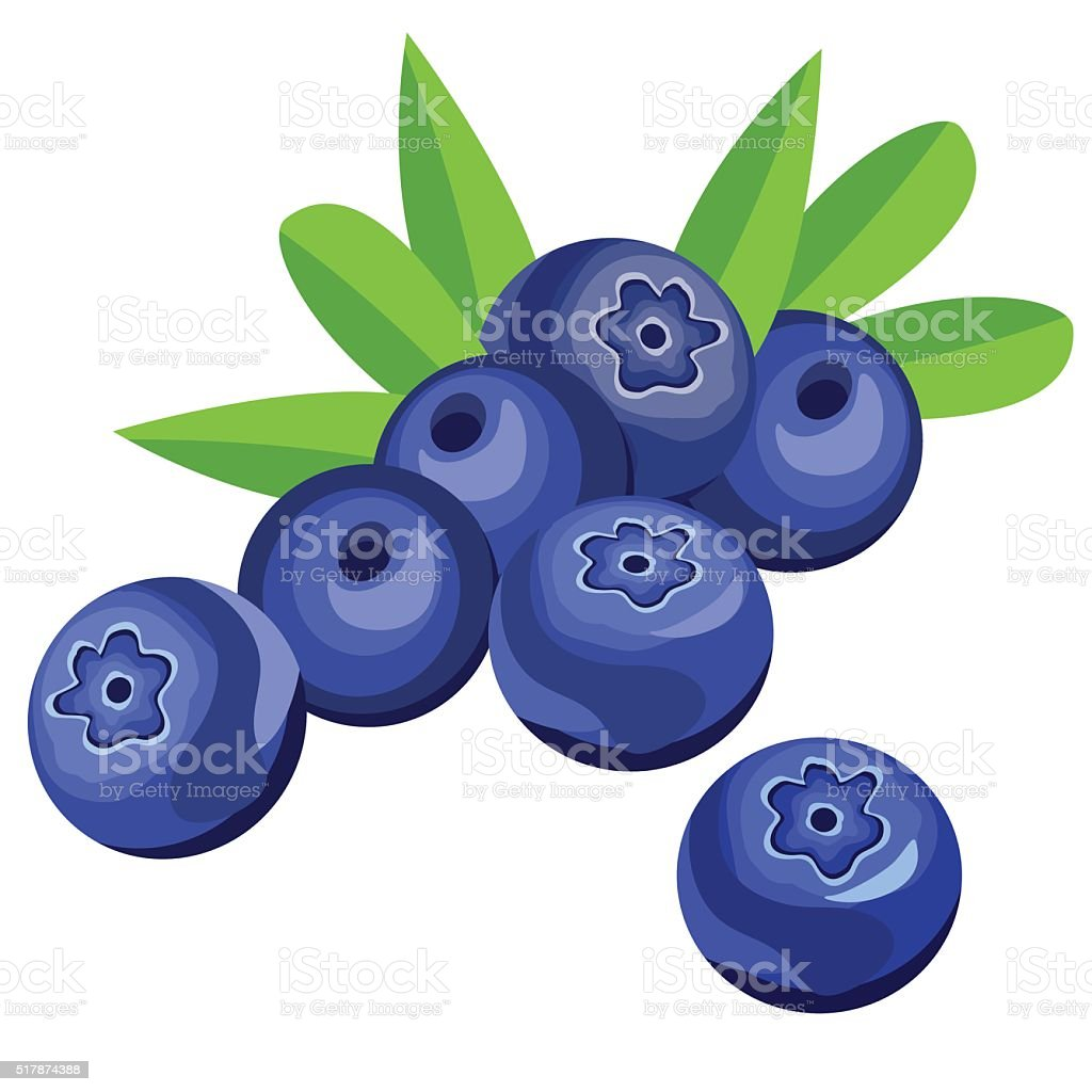 Blueberry berries and leaves vector art illustration