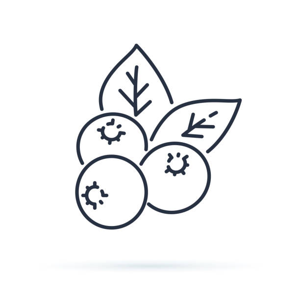 bildbanksillustrationer, clip art samt tecknat material och ikoner med blueberry platt linje-ikonen, skogen bär tecken, hälsosam mat-logotypen. illustration av tranbär, lingon för natiral matbutik. - bär