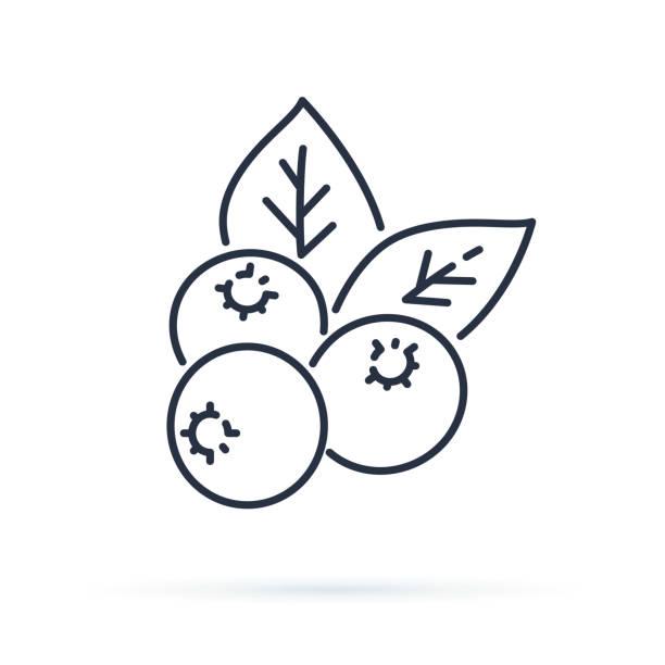 illustrazioni stock, clip art, cartoni animati e icone di tendenza di blueberry flat line icon, forest berry sign, healthy food logo. illustration of cranberry, lingonberry for natiral food store. - mirtilli