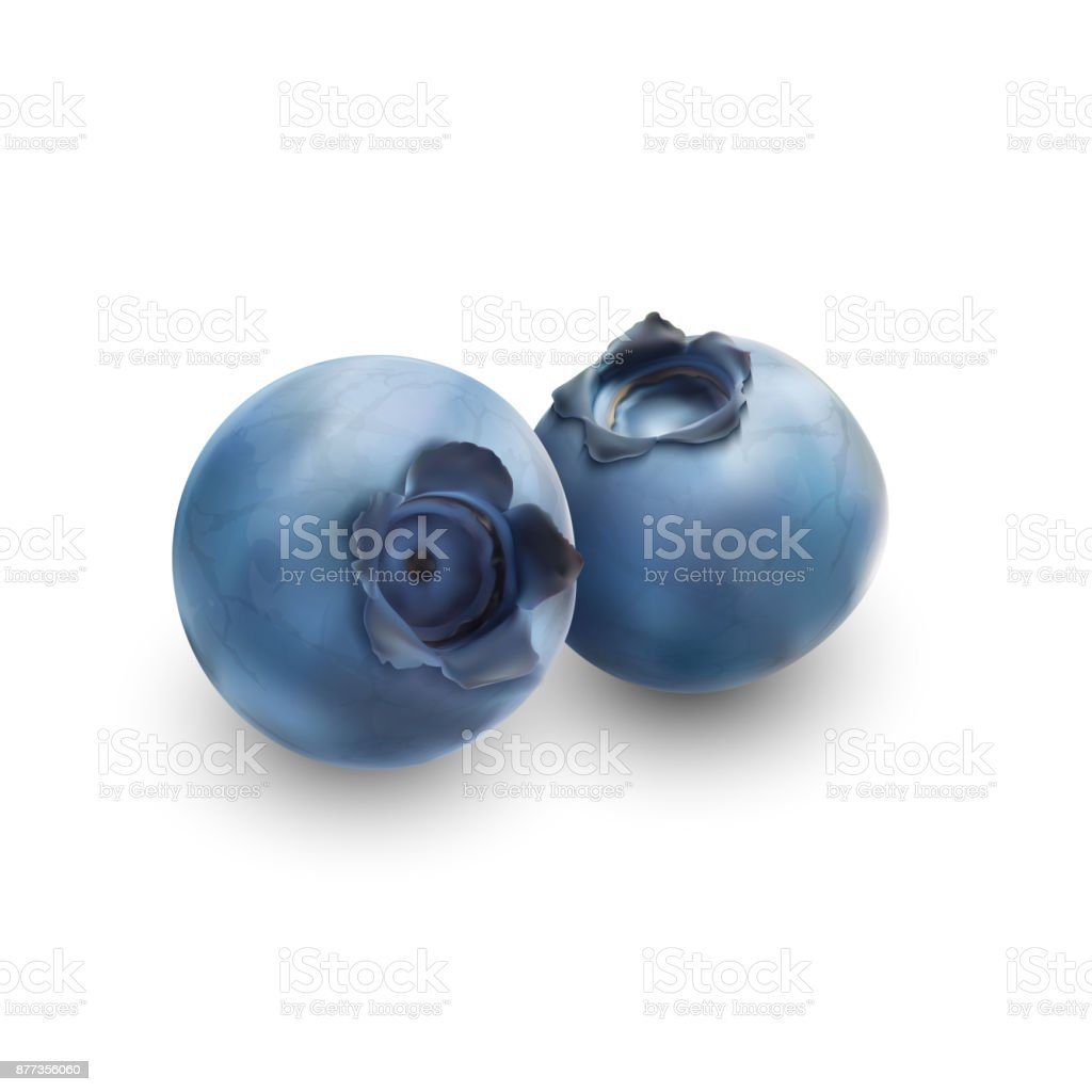 Blueberry isolated on white background vector art illustration