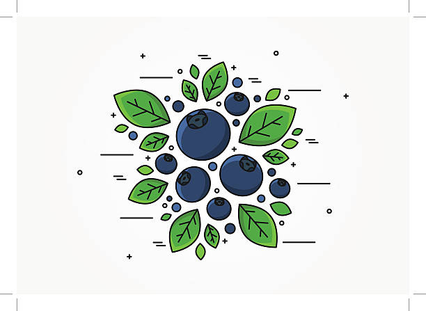 Blueberry line art vector concept vector art illustration