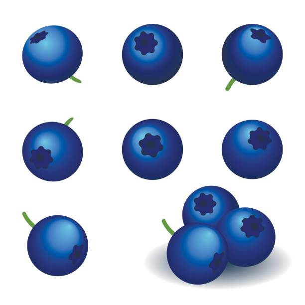 blueberry, set of vector icons. vector art illustration