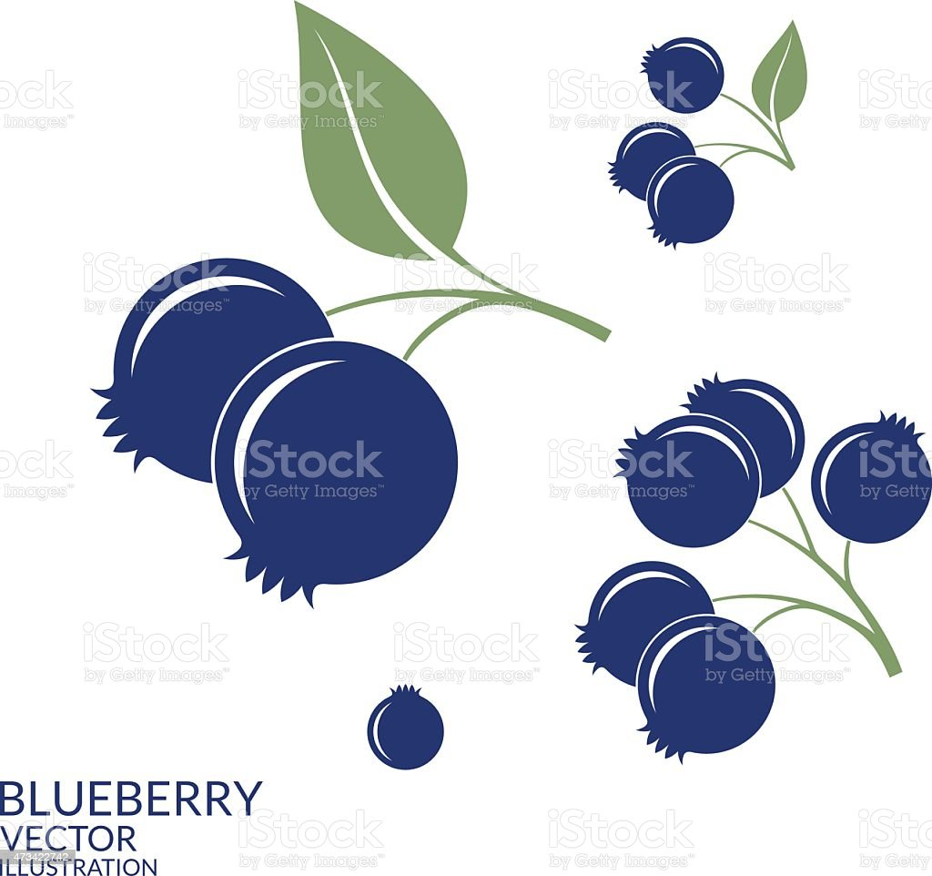 Blueberry. Set vector art illustration