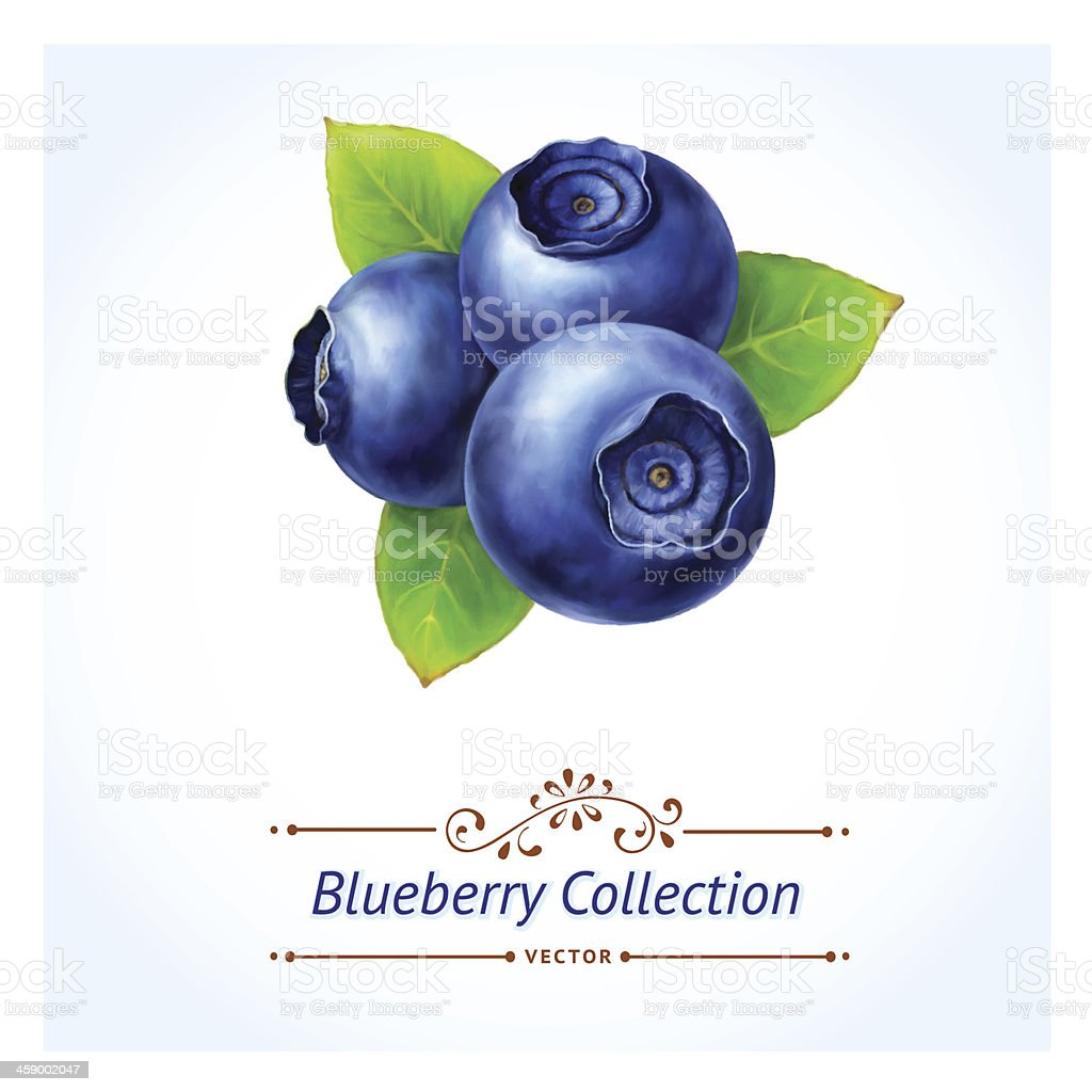Blueberry, vector art illustration