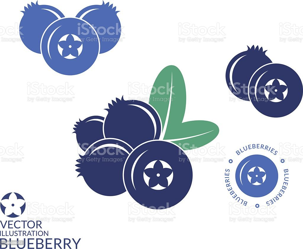 Blueberry vector art illustration