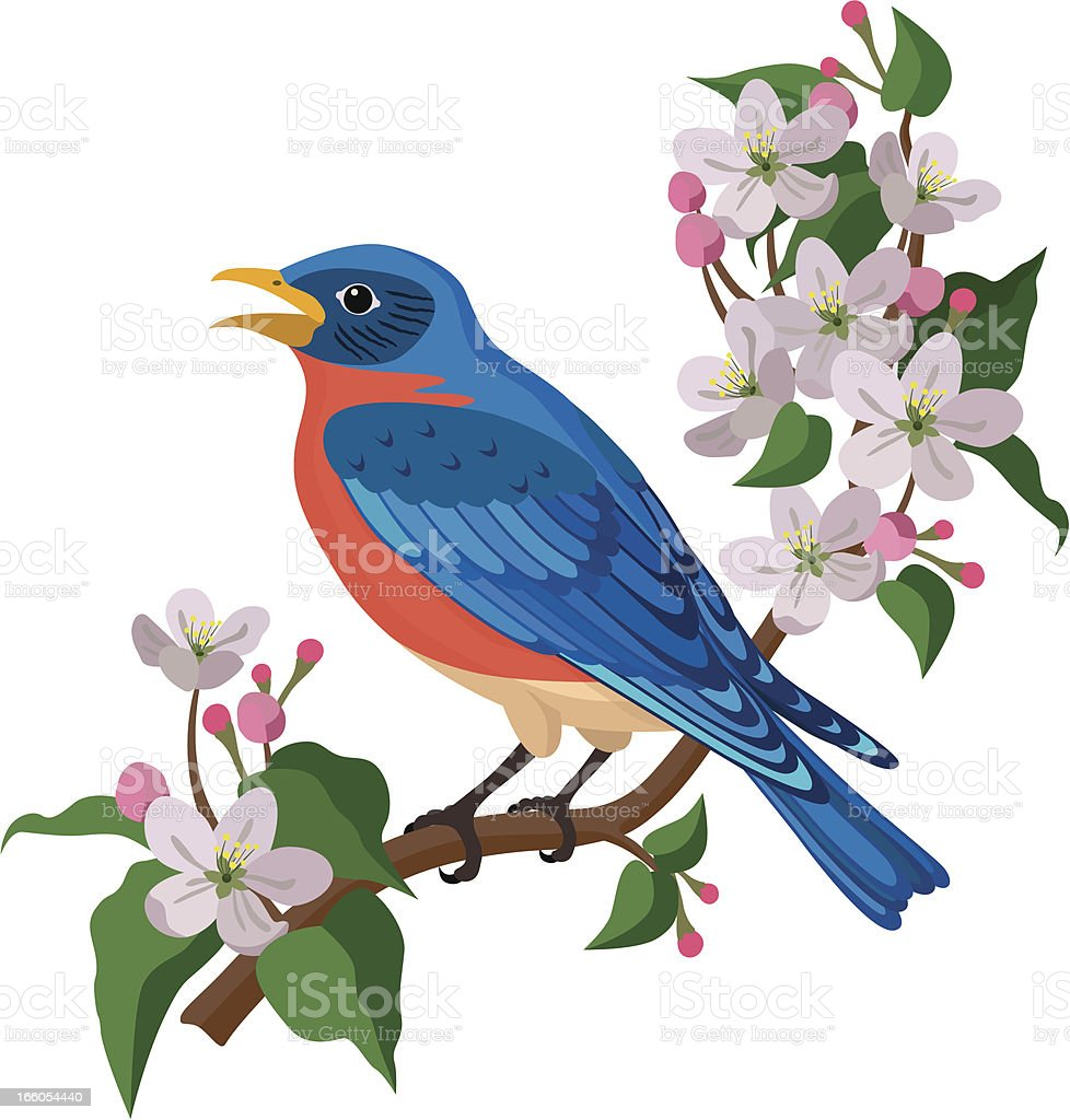 bluebird and apple blossoms royalty-free stock vector art