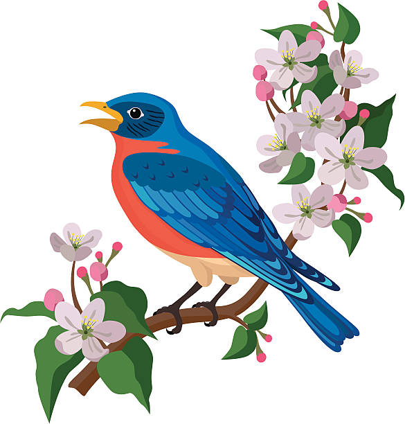 bluebird and apple blossoms A vector illustration of a bluebird and apple blossoms. The bluebird is the state bird of New York, USA. apple blossom stock illustrations