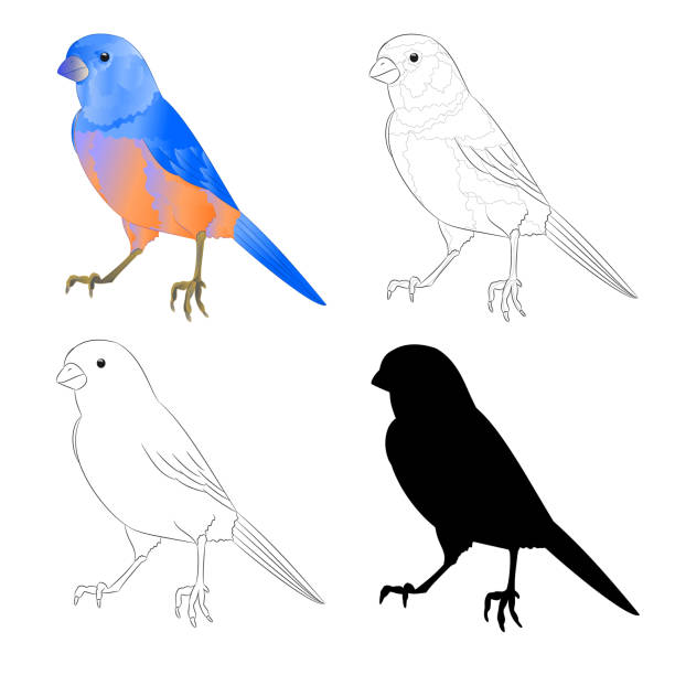 Bluebird small bird thrush  outline and silhouette on a white background  vintage vector illustration editable hand draw vector art illustration