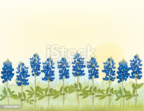 Bluebonnet Flowers in a row against a bright sky.  Bluebonnets are the state flower of Texas