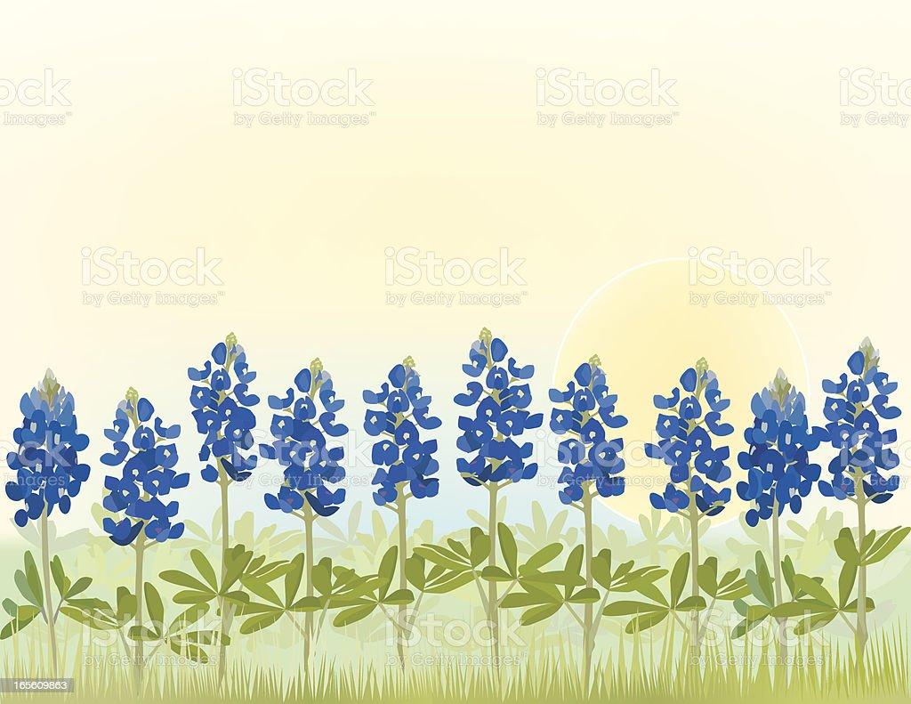 Bluebonnet Flower Field vector art illustration