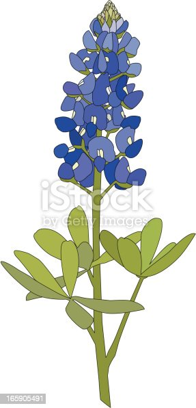 The Bluebonnet Flower is the much beloved state flower of the state of Texas.