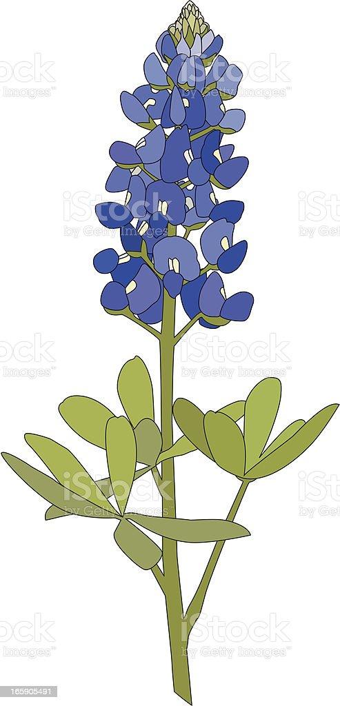 Bluebonnet Flower vector art illustration