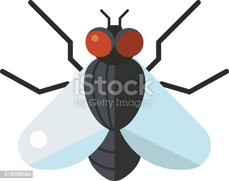 istock Bluebottle fly insect species calliphora vomitoria bug animal nature macro 518585094