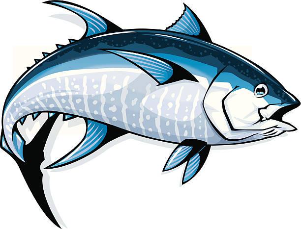 bluefin tuna vector art illustration