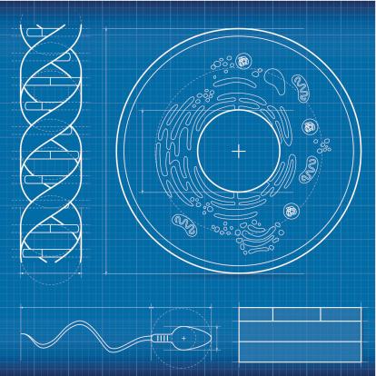 Blueprint Biology Stock Illustration - Download Image Now
