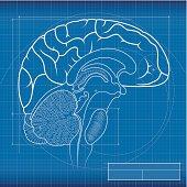 Blueprint, brain
