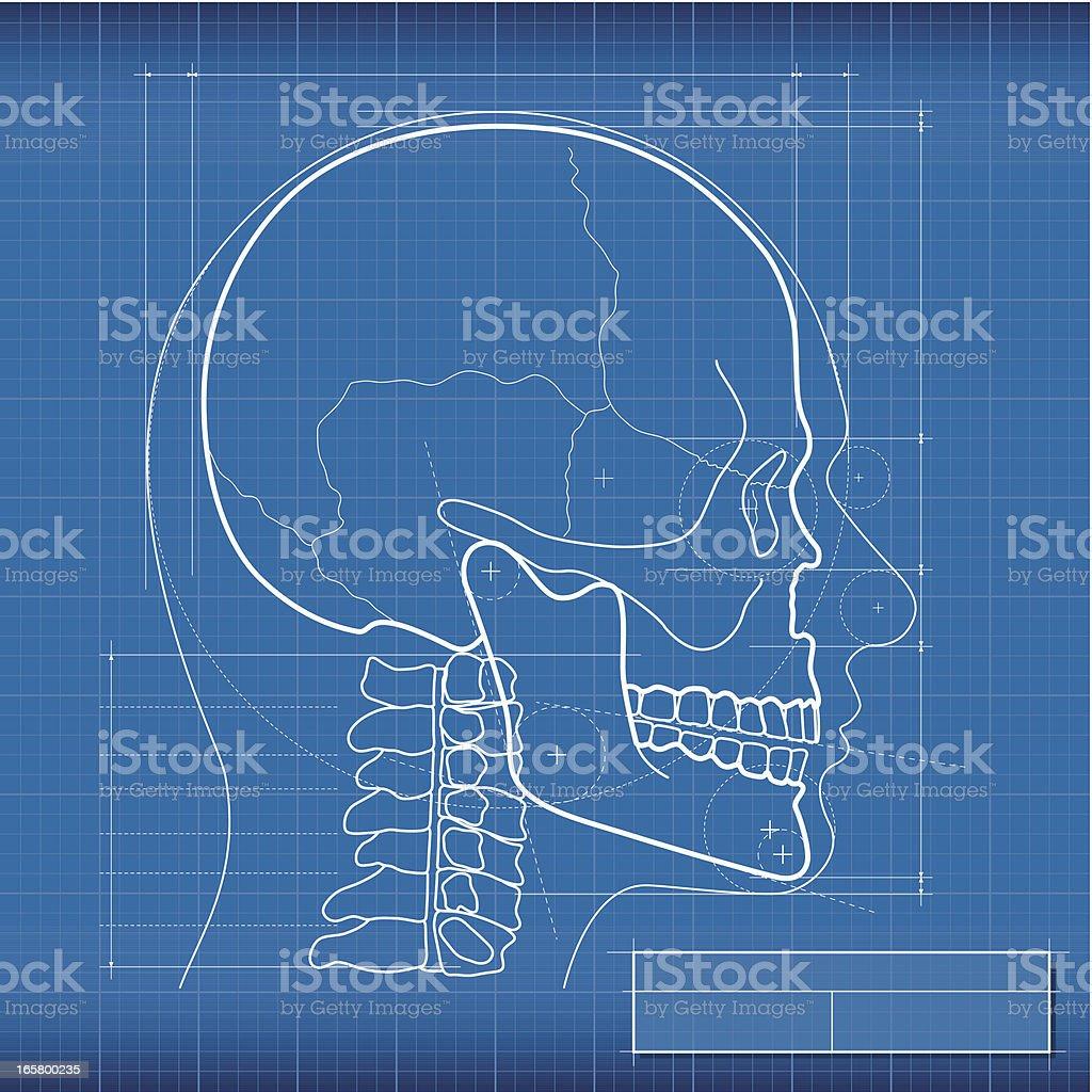 Blueprint, skull royalty-free stock vector art