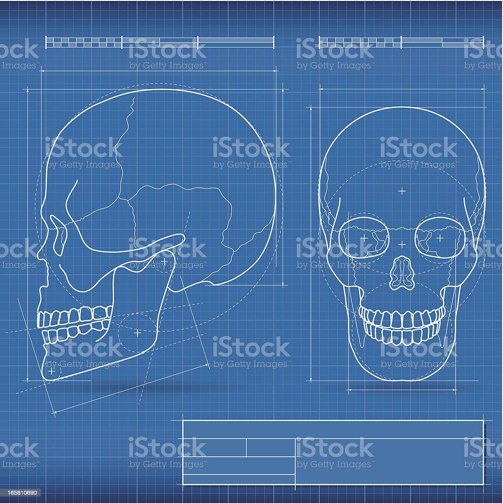 Blueprint skull stock vector art more images of anatomy 165810690 blueprint skull royalty free blueprint skull stock vector art amp more images of malvernweather Choice Image