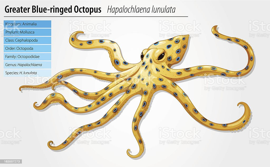 Blue-ringed octopus royalty-free stock vector art