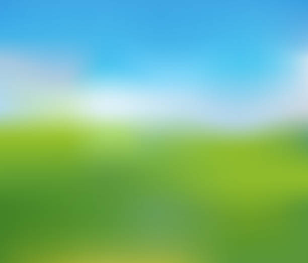 Blurred Nature Landscape of Sunny Summer Day Green Lawn under Clean Blue Sky, Blurred Nature Landscape of Sunny Summer Day, Vector Illustration. blue sky stock illustrations