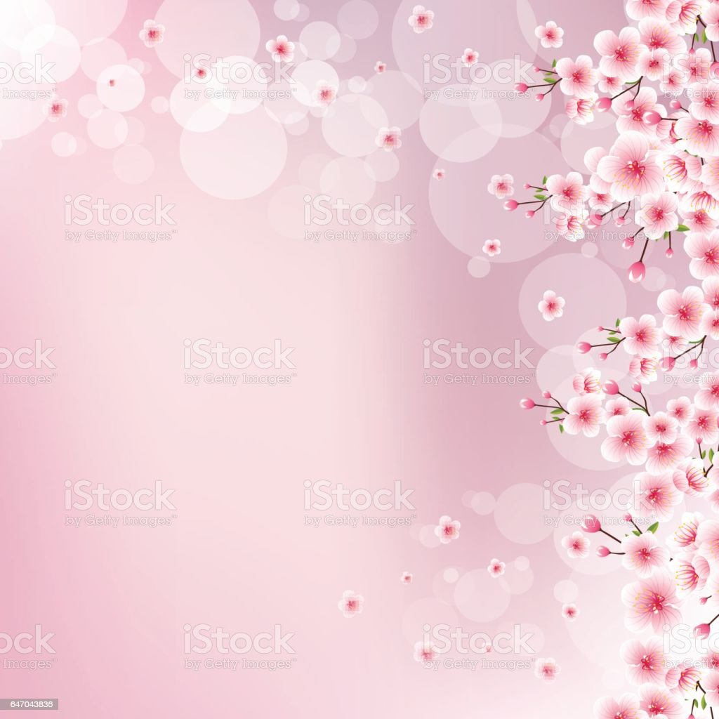 満開の桜とピンク背景をぼかした写真 のイラスト素材 647043836 | istock