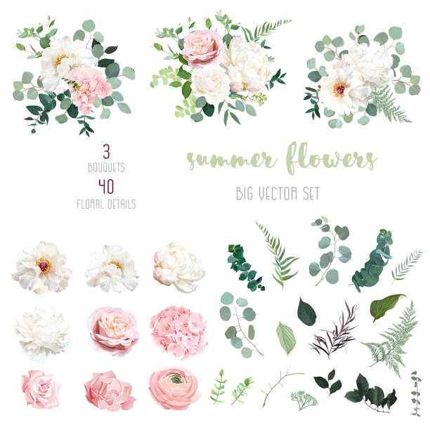 Blush pink rose and sage greenery, ivory peony, hydrangea, ranunculus flowers Blush pink rose and sage greenery, ivory peony, hydrangea, ranunculus flowers, eucalyptus big vector collection. Floral pastel watercolor style wedding bouquets. All elements are isolated and editable flowers stock illustrations