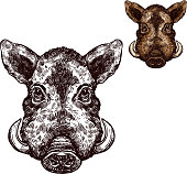 Boar aper muzzle vector sketch wild animal