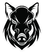 istock Boar head 528338813