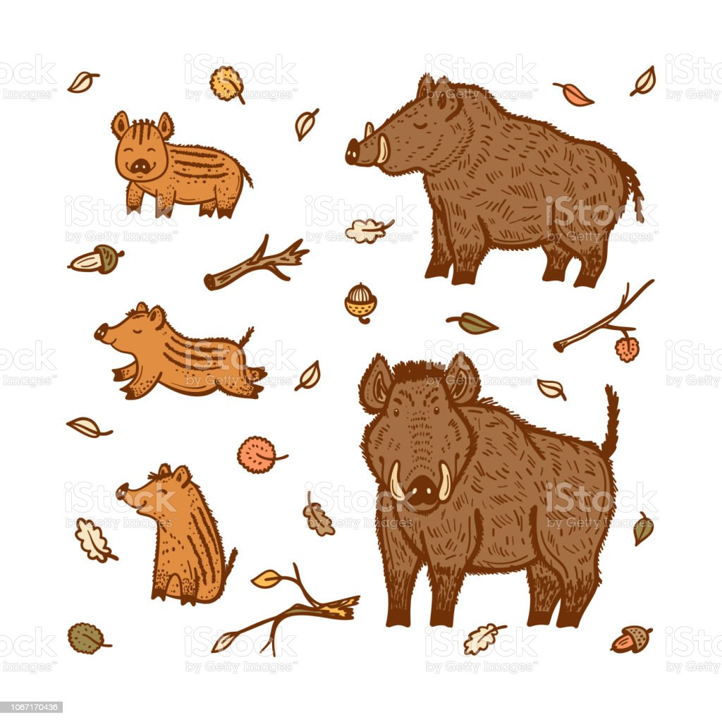 boars vector set hand drawn doodle wild pig and wild boar piglet cartoon cute animals collection. Black Bedroom Furniture Sets. Home Design Ideas