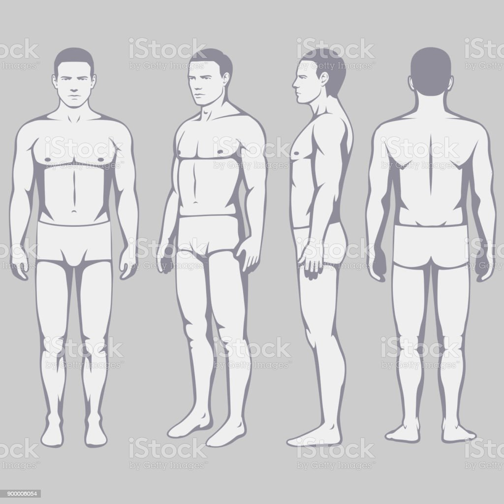 Medical diagrams of body front back and sides complete wiring body anatomy vector man front back side stock vector art more rh istockphoto com human body parts diagram body diagrams adult front and back ccuart Gallery